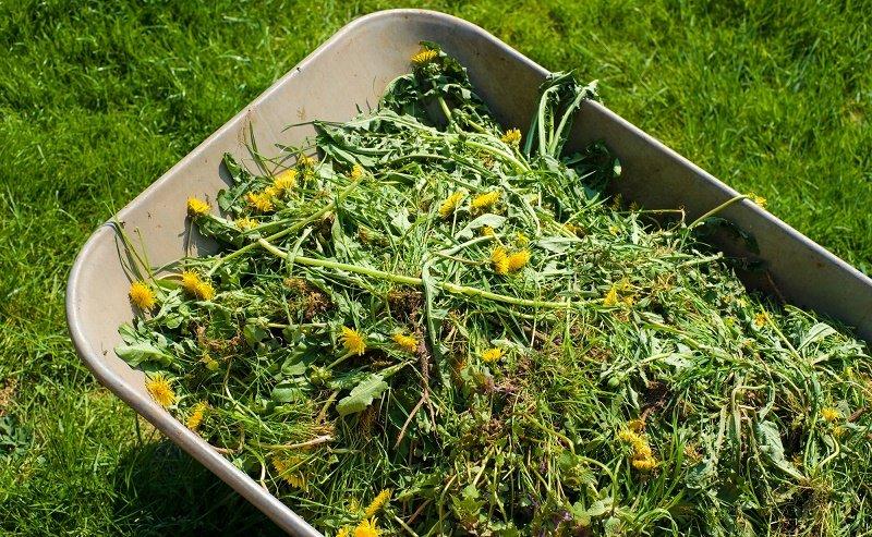 удобрение из травы для овощей