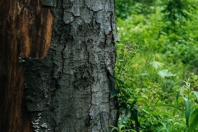 Что стоит помнить садовникам о коре деревьев