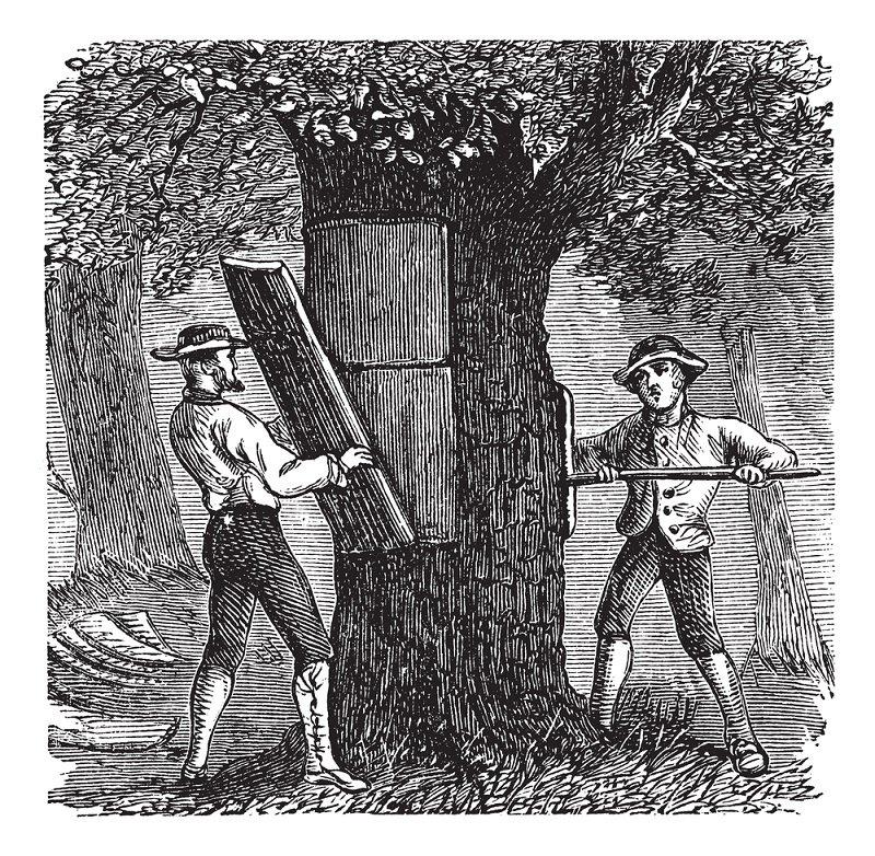 уход за корой фруктовых деревьев