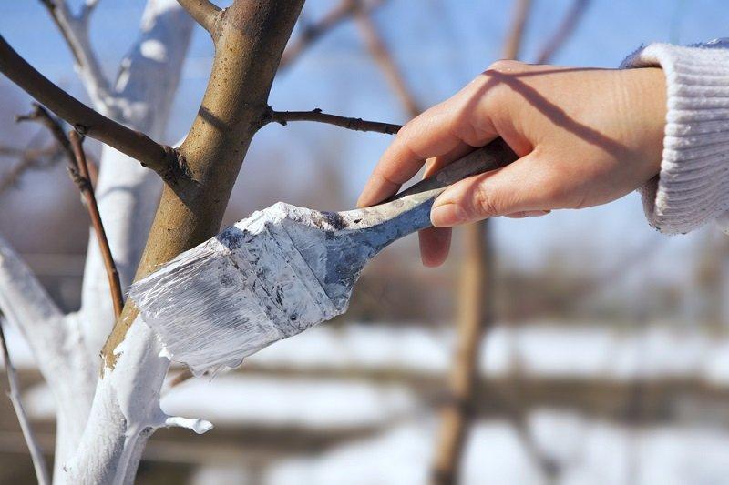догляд за пошкодженою корою садових дерев