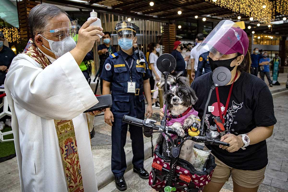 Уход за домашними животными в Республике Филиппины
