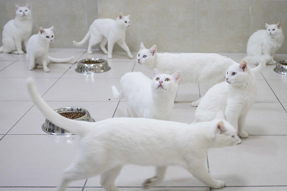 Почему взрослым котам нельзя давать молоко стоит, питомца, более, Более, когда, может, животное, котов, молоко, животного, кошек, котом, кошкой, кошки, делать, только, чтото, статье, важно, обращаться