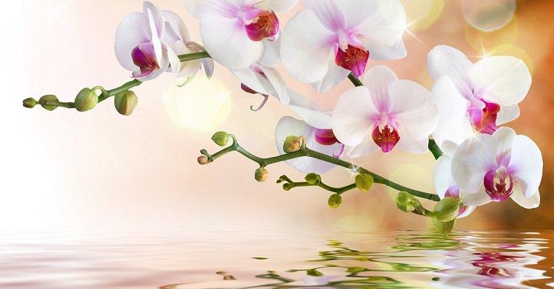 Как достичь максимального цветения орхидей: советы Алексея Горобея