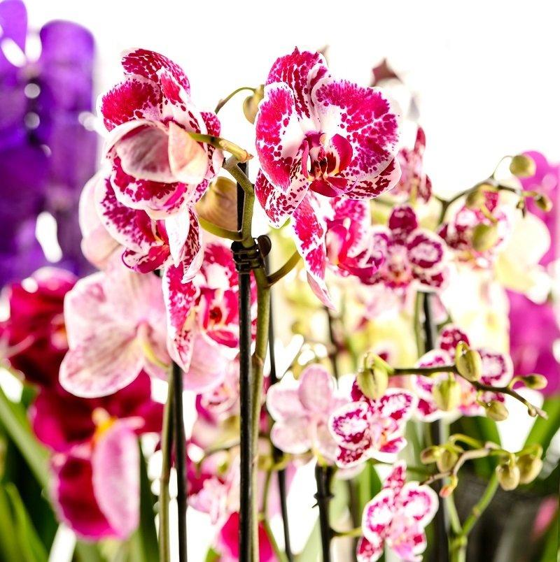 как ухаживать за орхидеей в горшке купленной в магазине