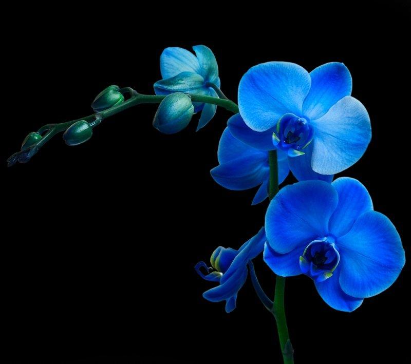 как правильно ухаживать за орхидеей в горшке