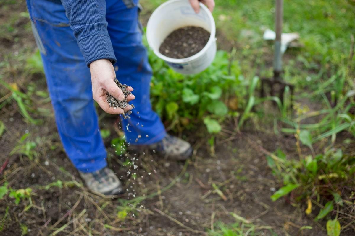 Уход за смородиной после урожая и его основные этапы
