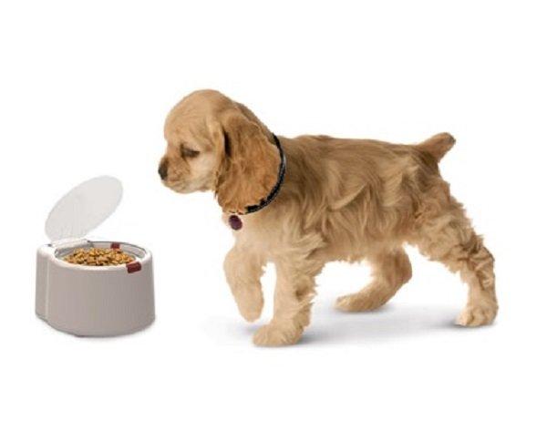 пес ест корм