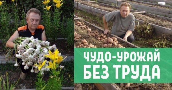 Уникальный огород Игоря Лядова! Высокие грядки — залог хорошего урожая.