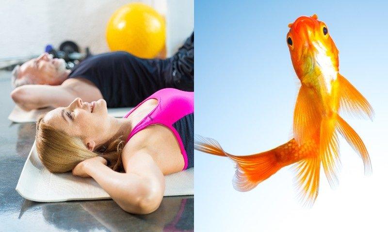 упражнения золотая рыбка для позвоночника