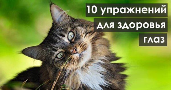 10 упражнений для здоровых глаз. Просто, эффективно и без лишних затрат времени!