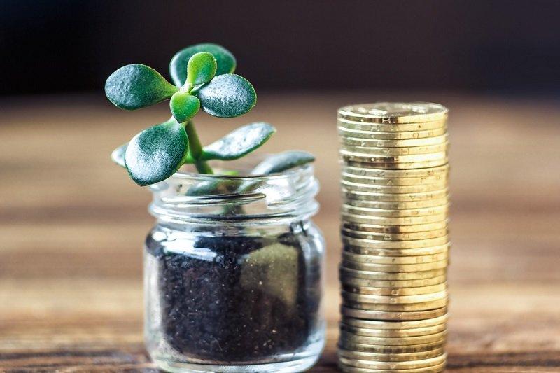 денежное дерево и монеты
