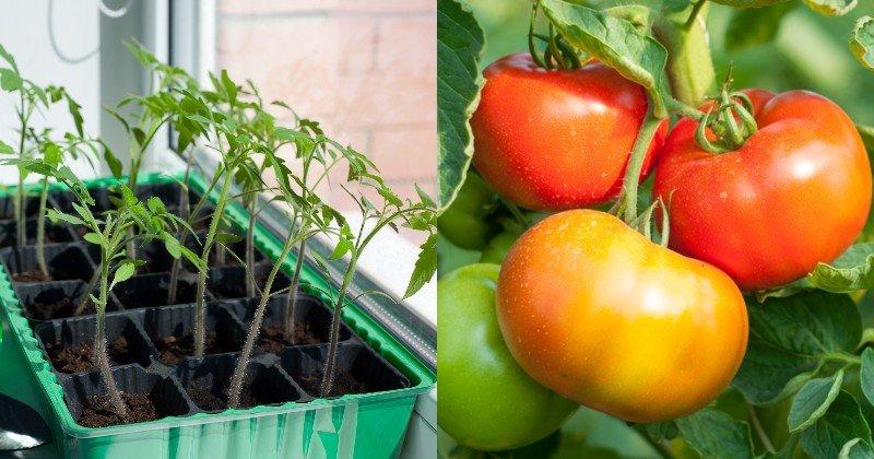 календарь высаживания рассады овощей