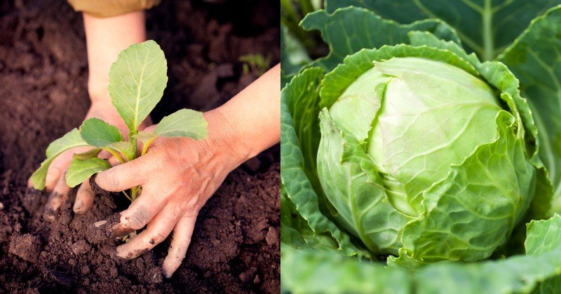 календарь посева рассады овощей