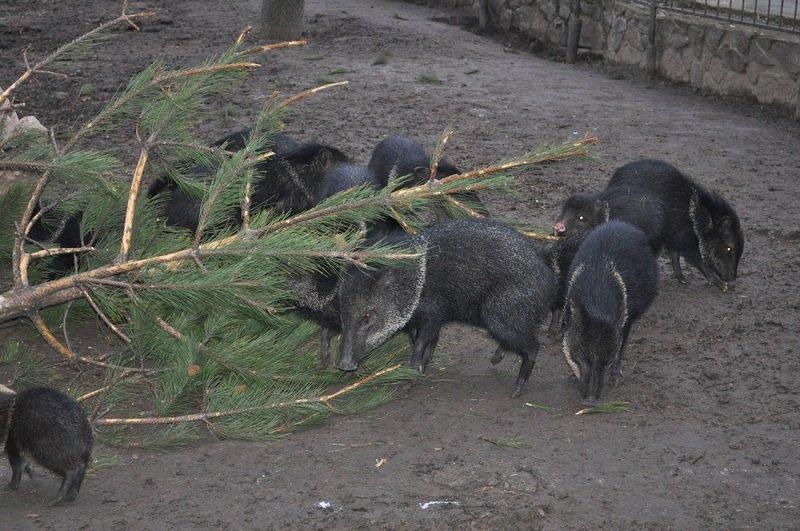 куда деть новогоднюю елку