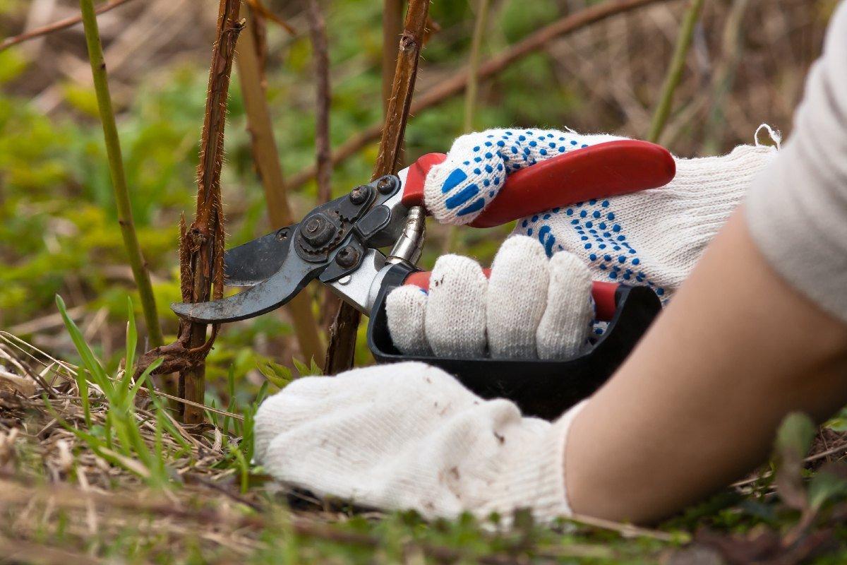 Куда ловкий садовник уносит стебли малины после обрезки Вдохновение,Советы,Клумбы,Малина,Рукоделие,Сад,Садоводство
