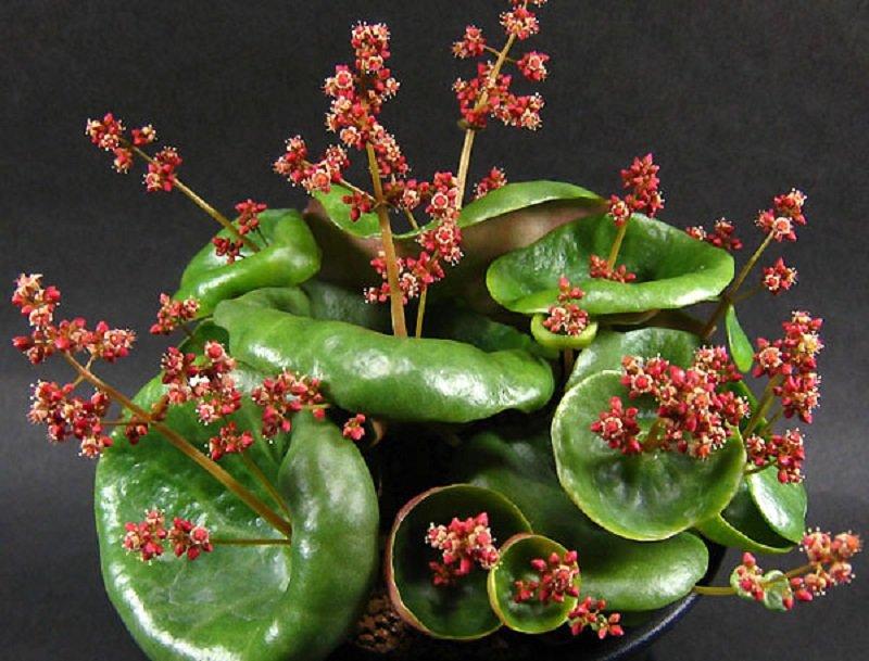 самые красивые растения