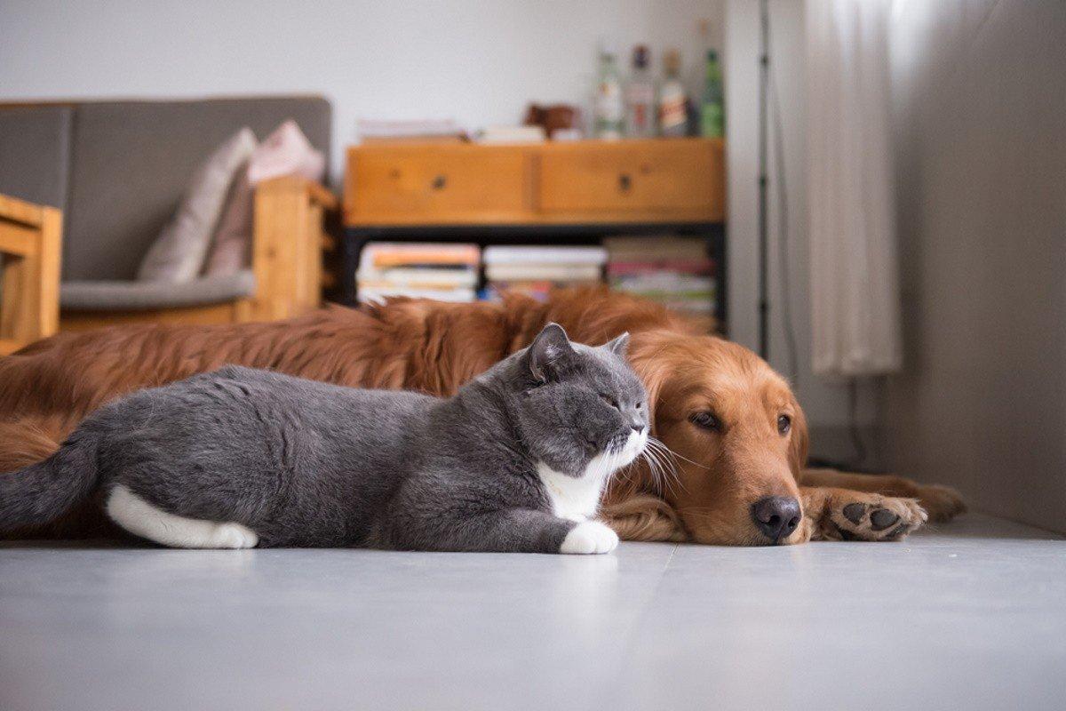 владельцы кошки живут дольше