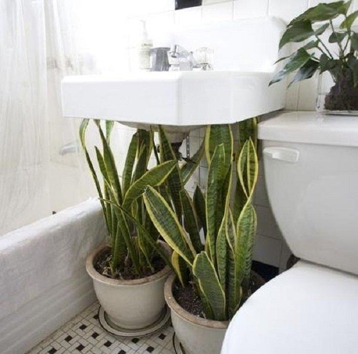 влаголюбивые растения примеры