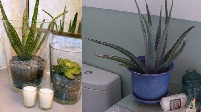 влаголюбивые растения и их признаки