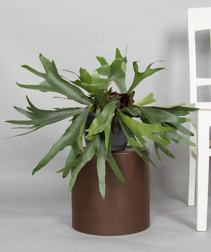 влаголюбивые растения комнатные