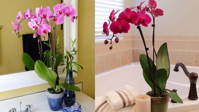влаголюбивые и водные растения