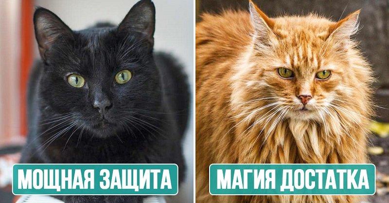 Магические возможности кошек по внешнему виду Вдохновение,Советы,Благополучие,Дом,Замужество,Коты,Лайфхаки,Любовь,Счастье