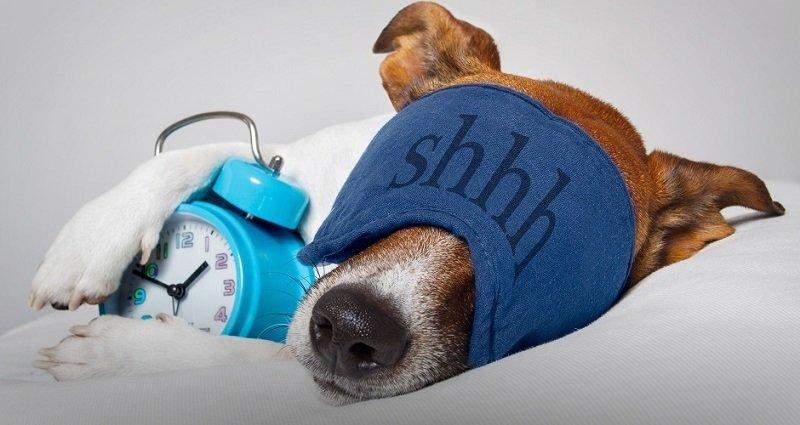 Во сколько нужно ложиться спать, чтобы просыпаться бодрым? Эта таблица — настоящее открытие!
