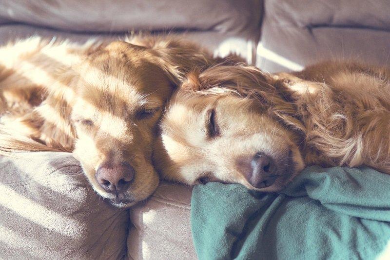 как проснуться бодрым и веселым