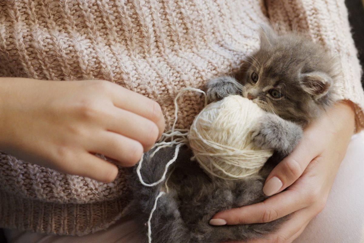 Как нужно правильно хвалить кота за хорошее поведение поведение, чтобы, будет, своим, очень, случае, нужно, лучше, хорошее, поглаживания, питомца, животных©, воспринимают, сможешь, своего, будешь, котами, время, хорошо, никогда