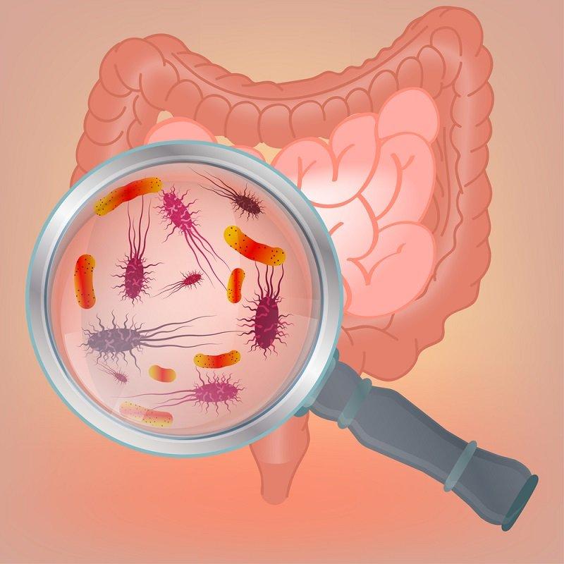 6 способов восстановить микрофлору кишечника: как создать идеальные условия для 100 миллиардов хороших микробов