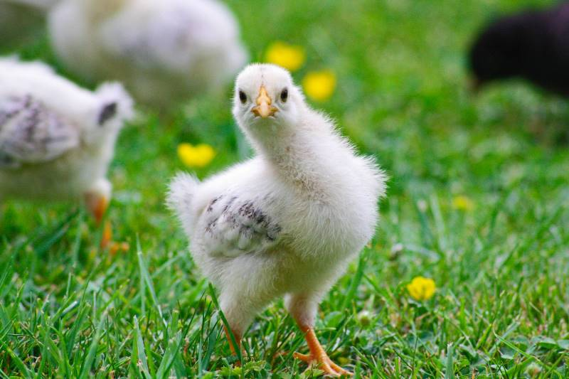 нельзя есть много яиц
