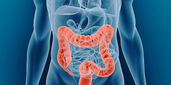 вред мяса для кишечника