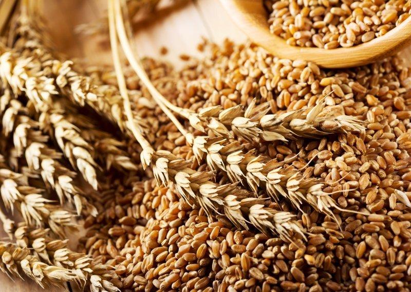 вред ростков пшеницы