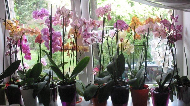 škodcami orchideí a ako s nimi bojovať
