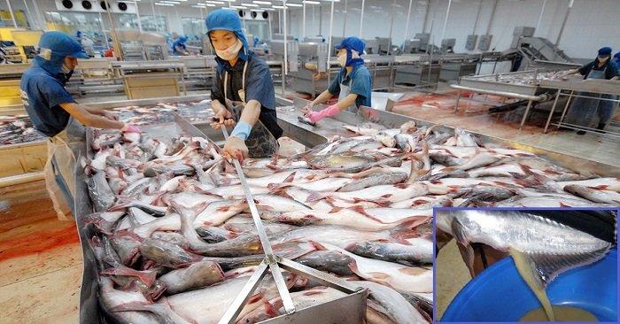 вредная рыба для беременных