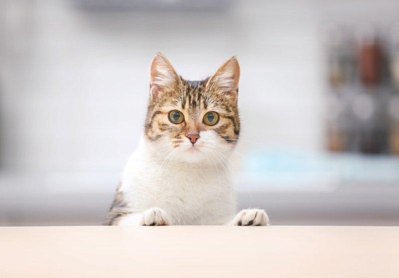 кот на стеклянном столе