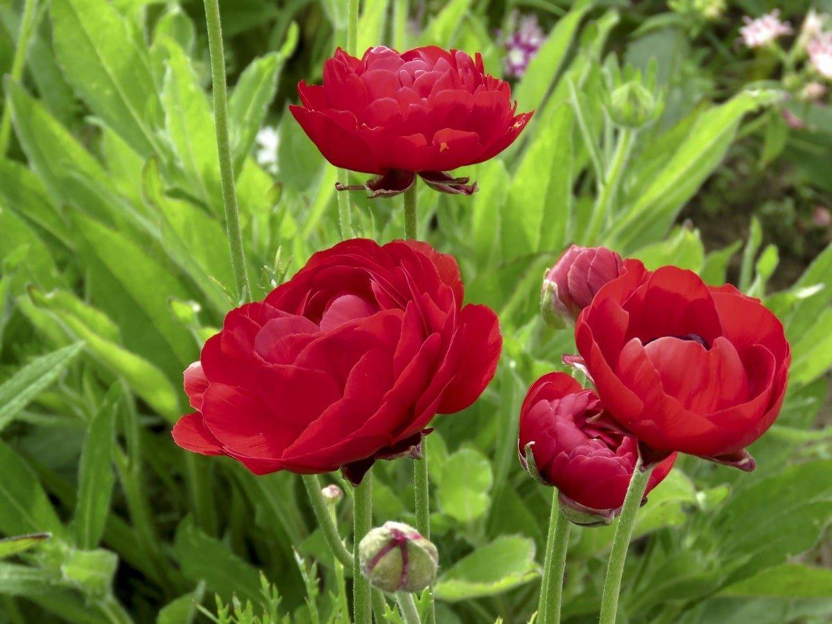 У свекрови не получалось вырастить такие цветы, зато у меня растут пышно и цветут всё лето Вдохновение,Советы,Дача,Дом,Клумбы,Розы,Сад,Цветение,Цветы