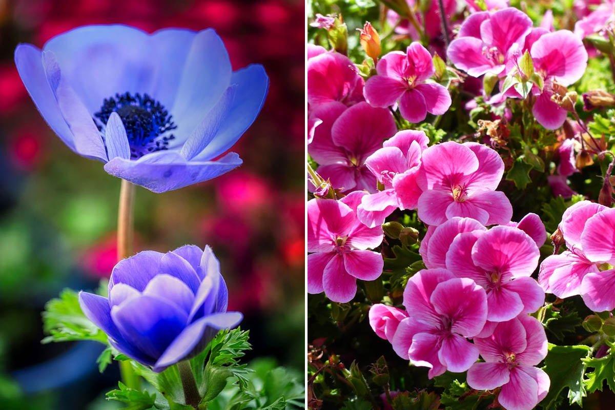 Зачем я заморачиваюсь с капризными цветами, если можно засадить весь двор кустарниками Вдохновение,Советы,Клумба,Медитация,Полив,Почва,Растения,Сад,Садоводство,Уход,Хобби,Цветы