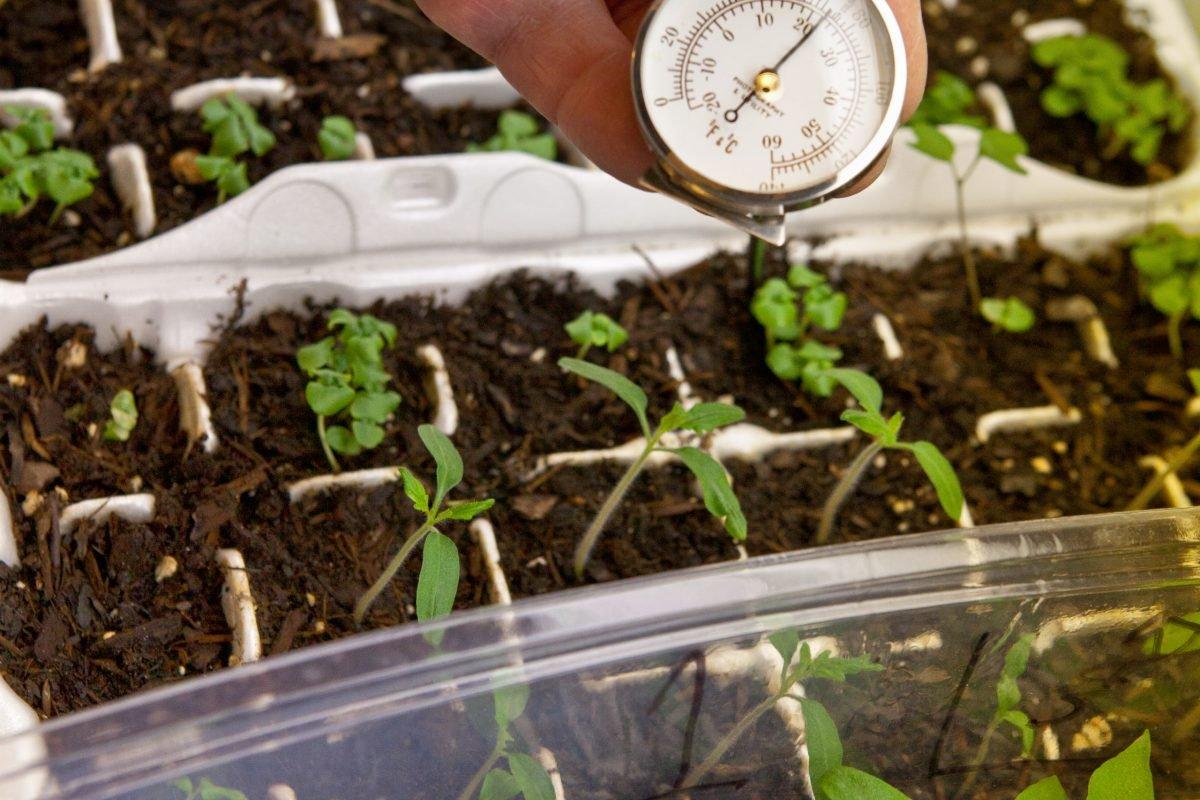 выращивание перцев дома