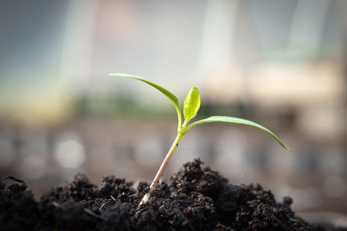 выращивание перцев от а до я