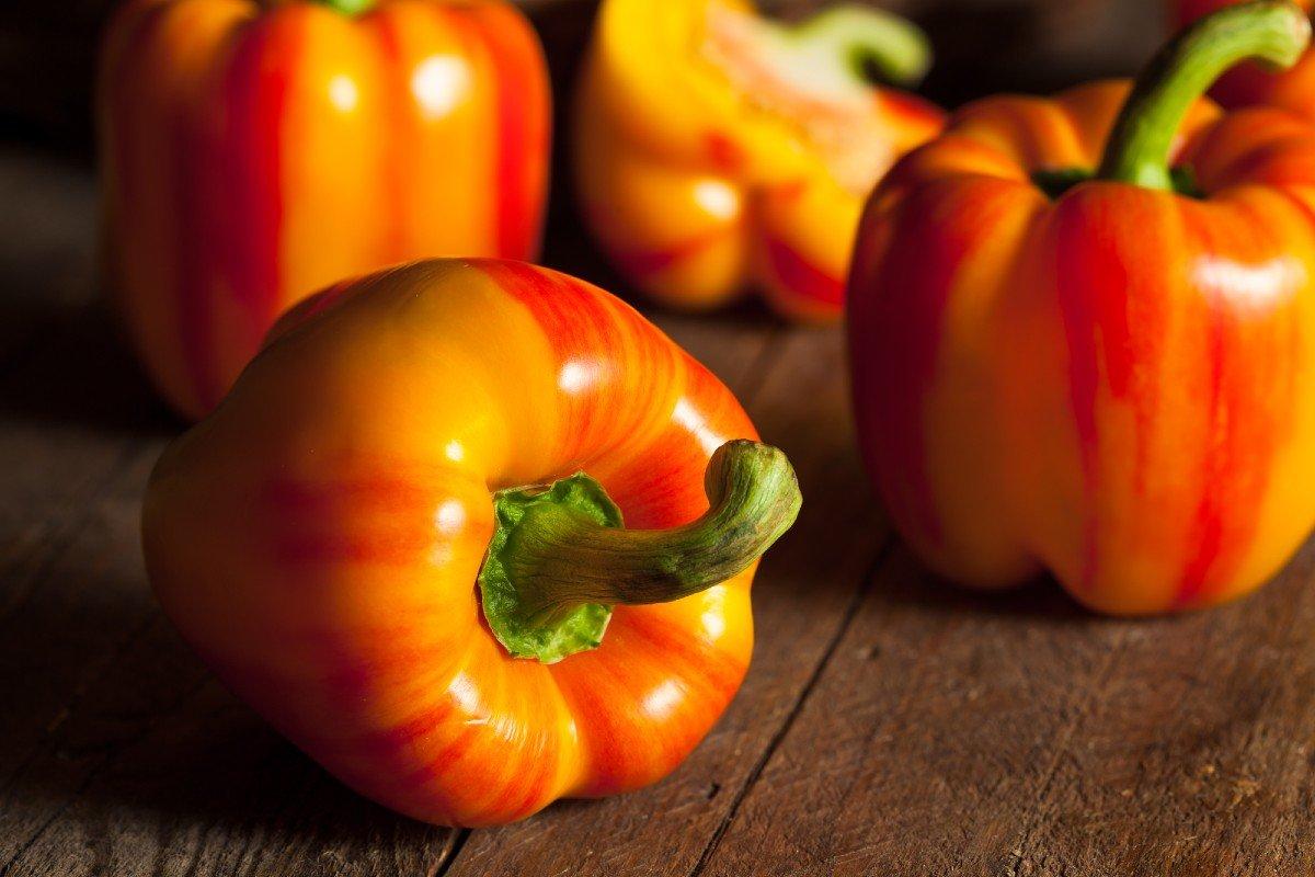 выращивание перца болгарского