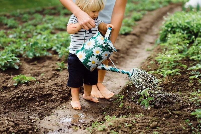 выращивание редиса весной