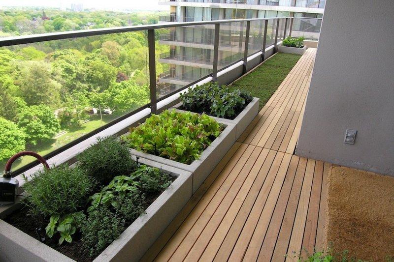как выращивать зелень дома