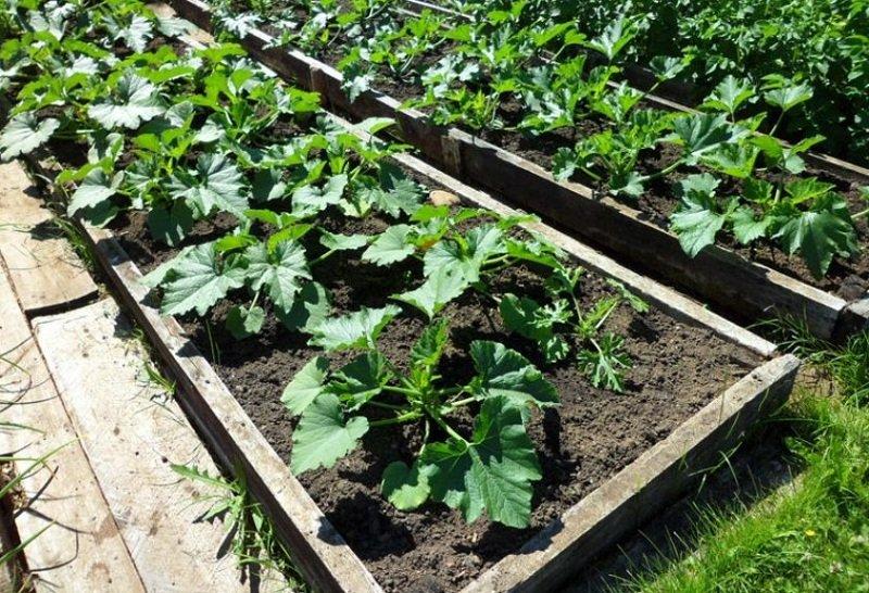 посадка картофеля в высокие грядки