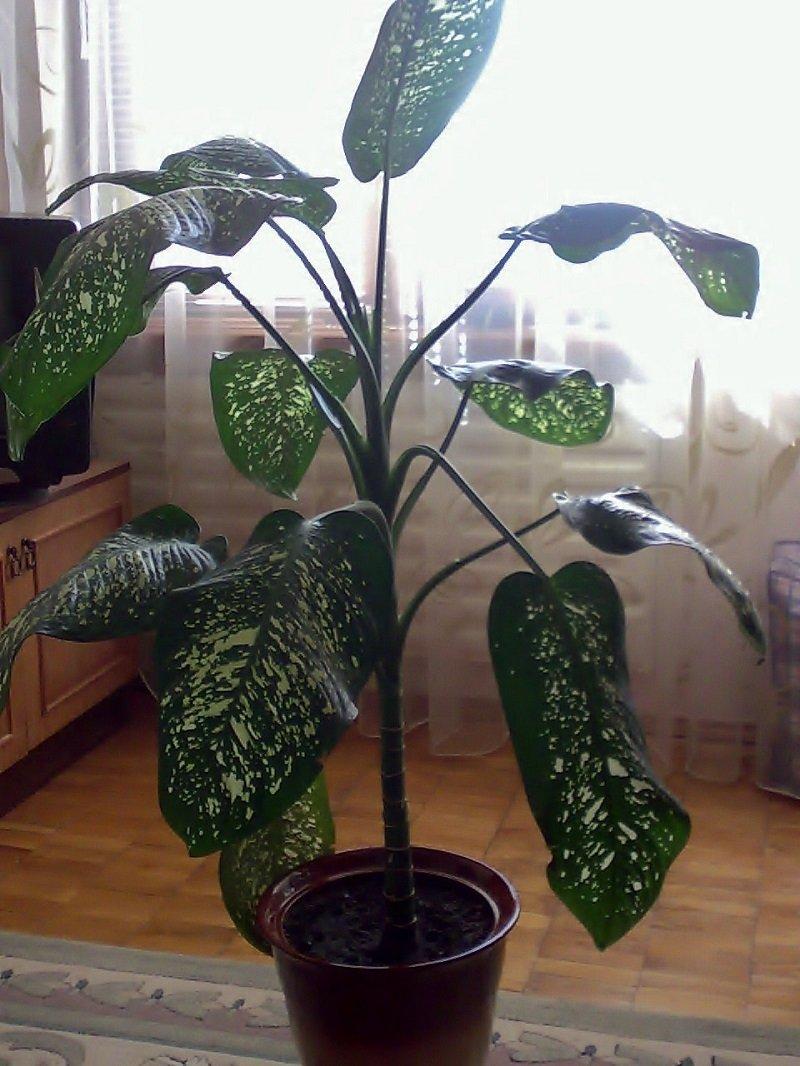 ядовитые комнатные растения в детском саду