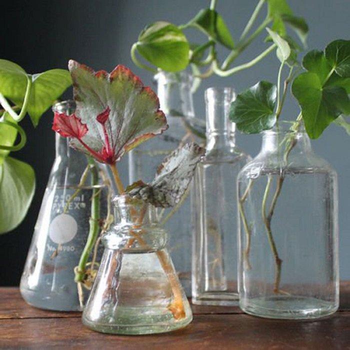 янтарная кислота и растения