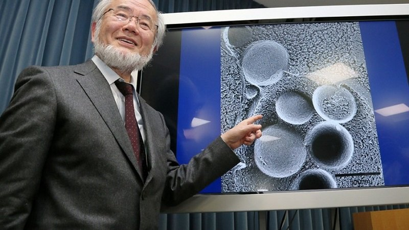 окно питания японский ученый