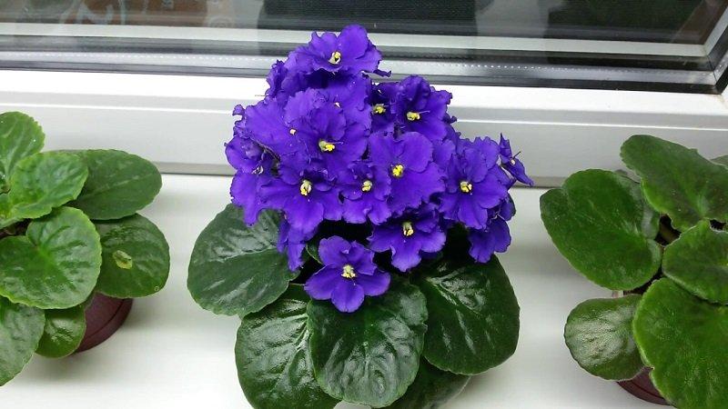 йод для защиты растений
