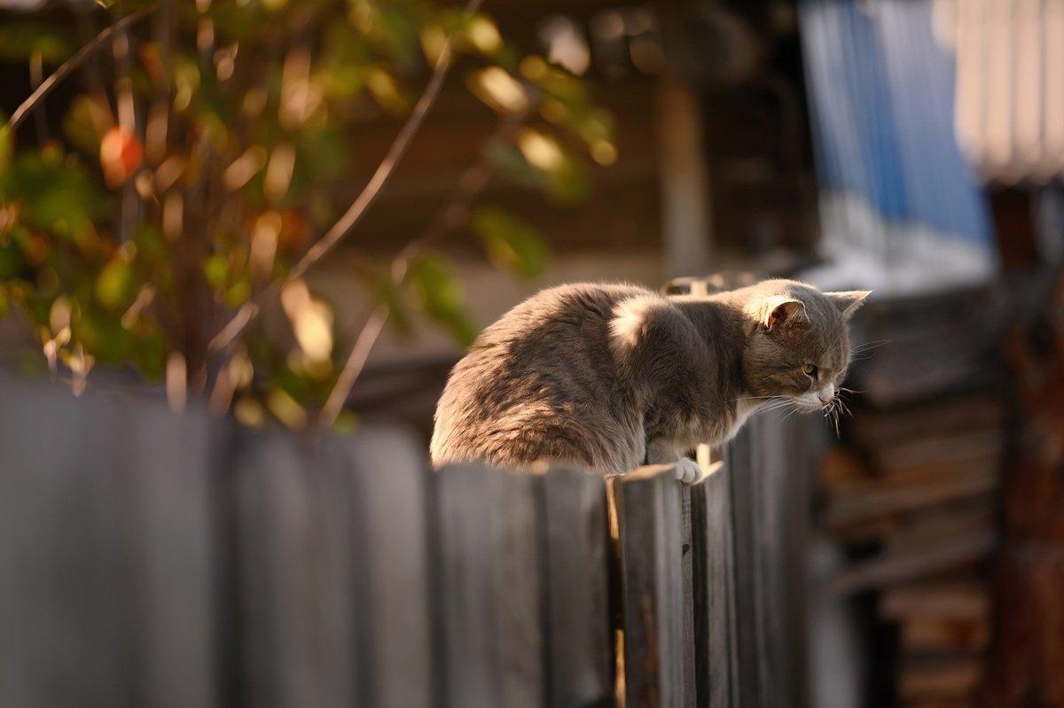 Горько пожалел, сделав забор из старого шифера, демонстрирую печальное зрелище