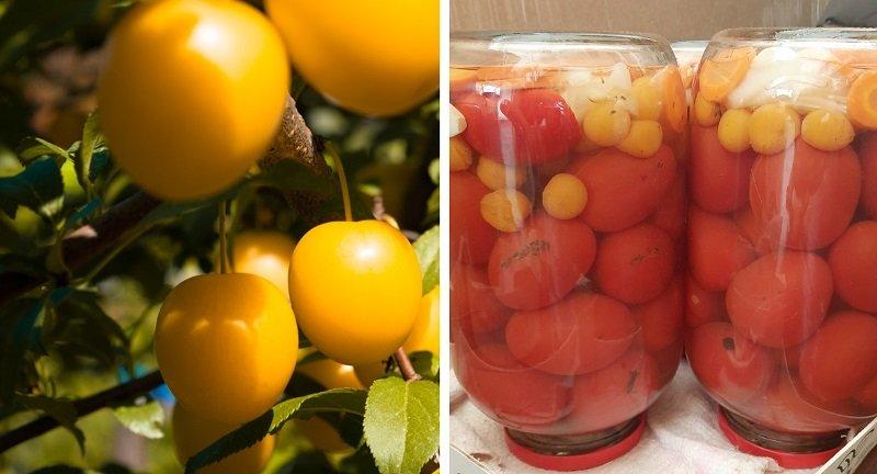 Консервирую помидоры с алычой уже второй год, уксус добавлять перестала